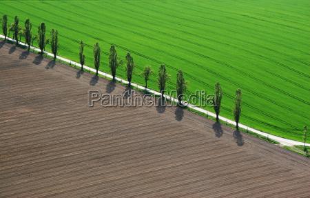 vista panoramica luz arbol arboles verde