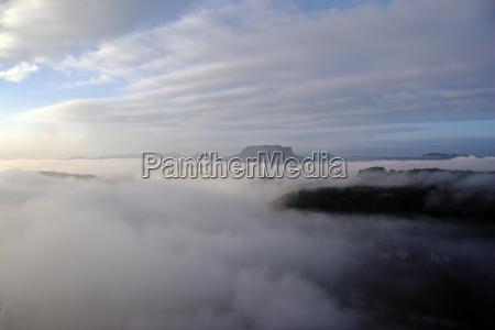 arbol arboles niebla campos prados por