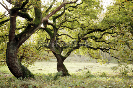 arbol verde hojas otonyal tranquilidad roble