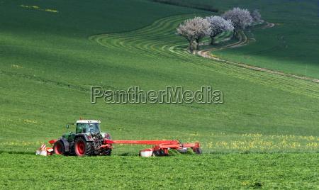 arbol arboles planta conducir violacion agricultura