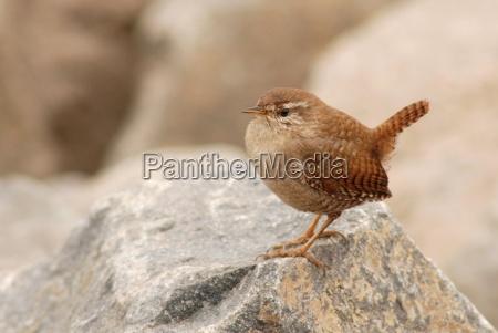 pajaro aves irrelevante diminuto altas poco