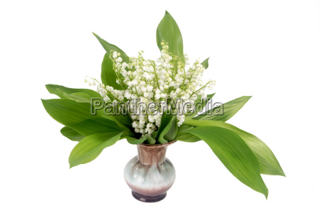 flower flowers plant cut flowers bouquet