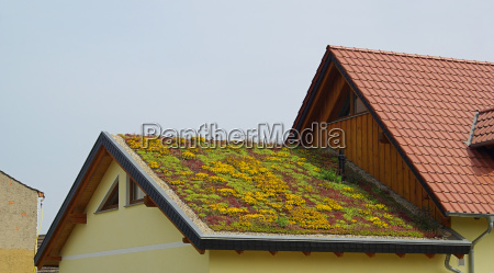 azotea verde techo verde 01