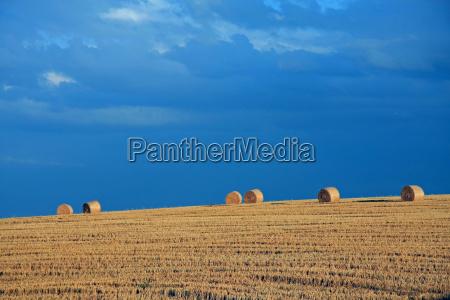 agricultura campo las balas de paja