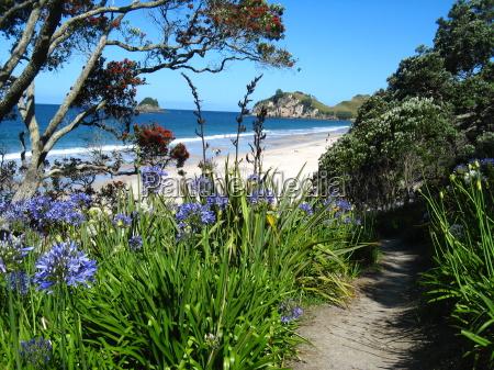 pintoresco blooming bay coromandel nz