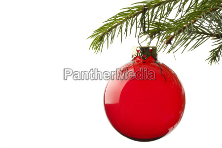bauble on spruce branch