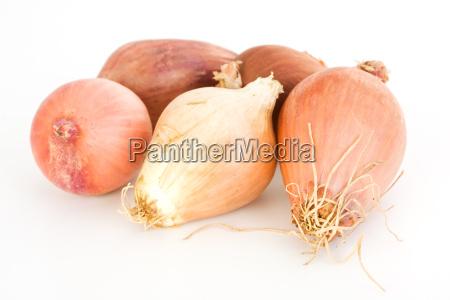 comida cinco vegetal cebolla chalote aislado