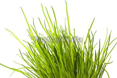comida especia especias verde hoja vertical