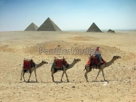 tres caravana de camellos que pasan