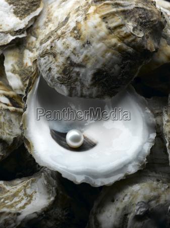 perla en shell de ostra