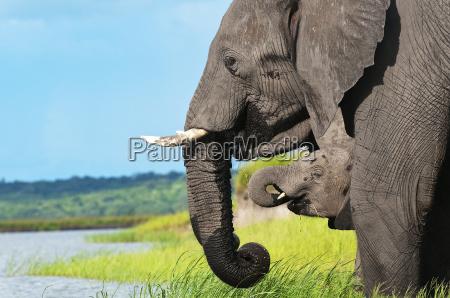 familia elefante 01jpg