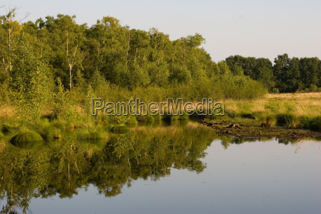 reflections in the high moor