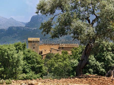 finca en olive grove mallorca