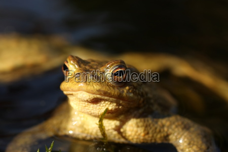 toad in the evening light