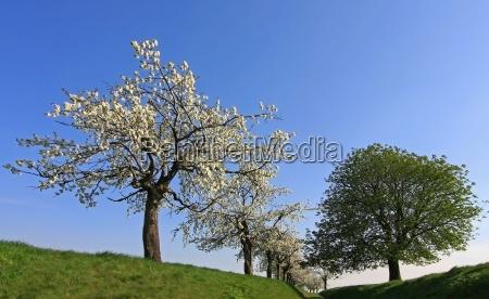 arbol arboles camino de tierra primavera