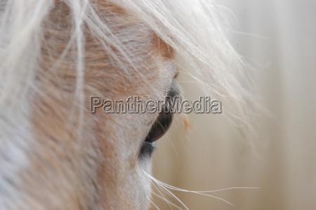 caballo ojo organo ver melena