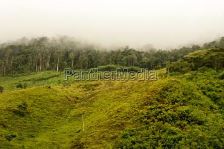 arbol arboles selva deforestacion amazonas bosque