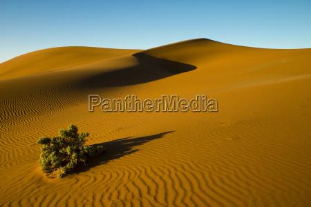 desierto namibia arbusto arenas arena