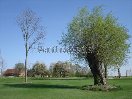 verde golfe jogador de golfe mecklenburgvorpommern