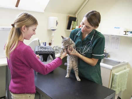 young, girl, bringing, cat, for, examination - 2332245