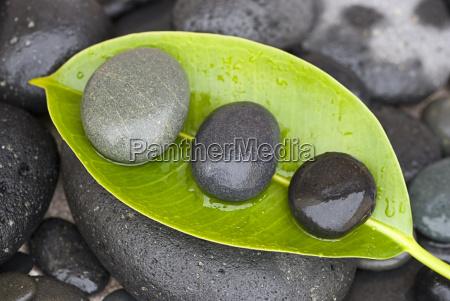 piedras en la hoja verde