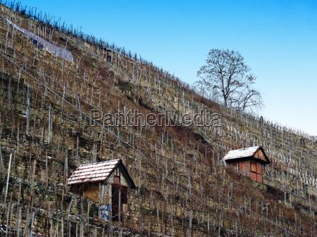 casa construccion arbol invierno agricultura vinya