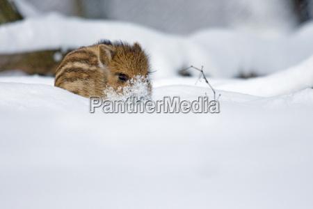 refresciendo en la nieve