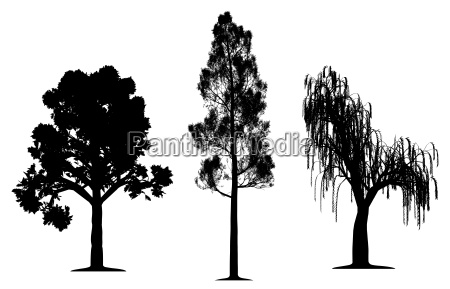 oak forest pine and weeping willow