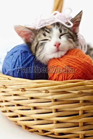 gato que juega con hilado