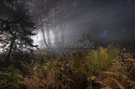 montanyas niebla helecho bosque hojas naturaleza