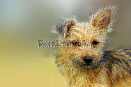 animal los animales perro perros berlin