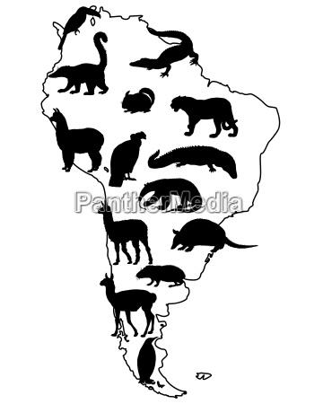 opcional animal cocodrilo negro caucasico pingueino