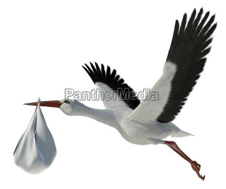 stork amp bebe