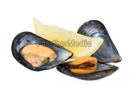 comida liberado aislado mariscos mejillon cal