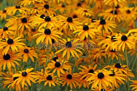 yellow flowers yellow flowers