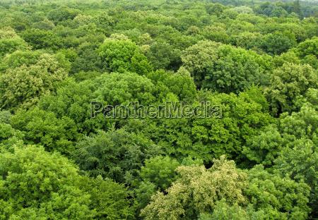 medio ambiente color arbol parque madera