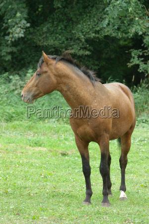 arbol arboles caballo marron piel semental
