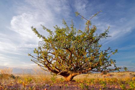 planta del desierto y cielo