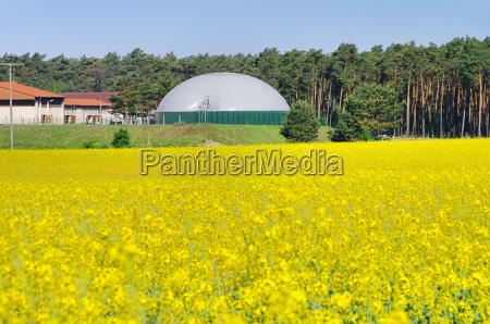 violacion violacion campo planta biogas biomasa