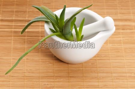 aloe vera medicina herbaria