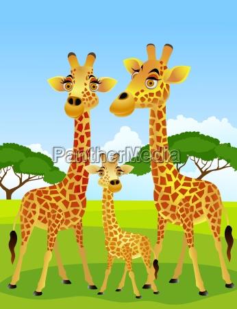 familia jirafa