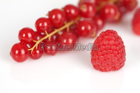 single berry y strand