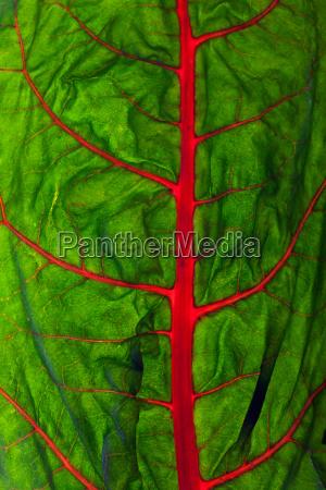 verde vegetal crudo vena pagina