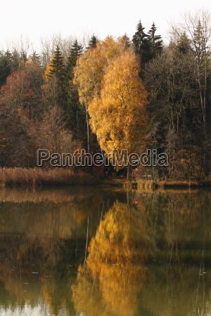 waldweiher buxheim