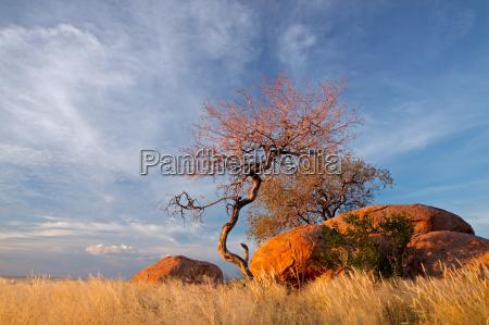 rocas y arboles de granito