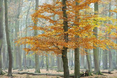 otonyo en wisentgegewald springe alemania