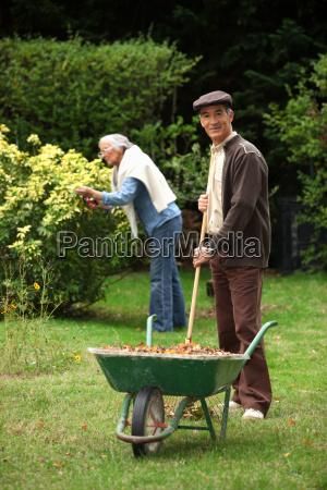 ancianos hojas de recoleccion de pareja