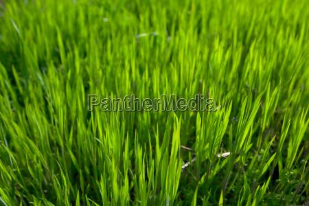 campo hoja vegetacion prado hierba cesped