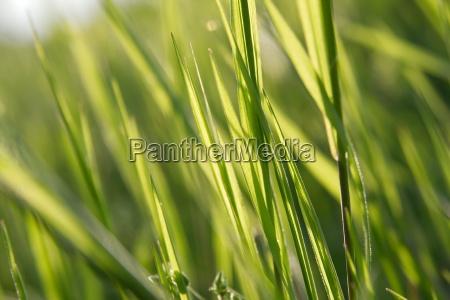 cerrar primer plano hoja cerca prado
