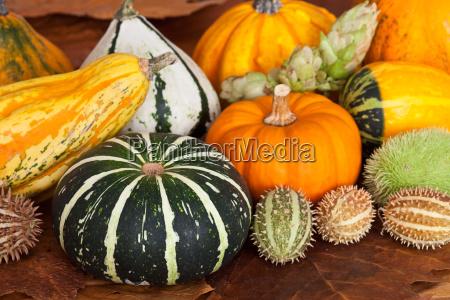 otonyal vegetal decoracion calabaza temporada naturaleza